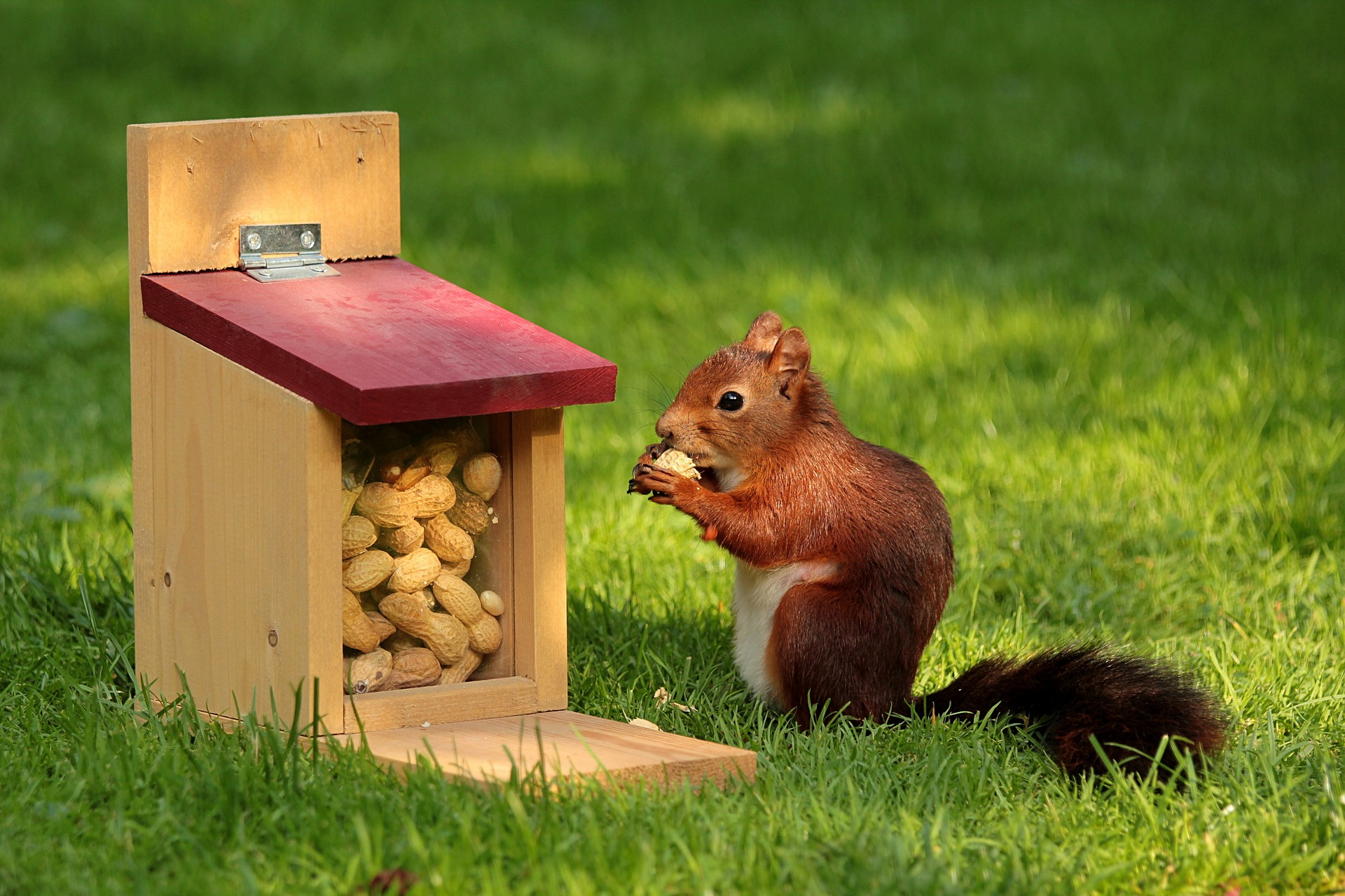 organizing the squirrels